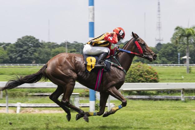 Singapore Pools Betting - Horse Racing Odds