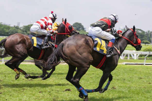 Singapore Pools Betting - Reading Horse Racing Odds