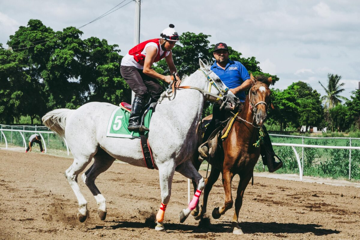 live horse racing SG